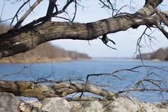 Träd som inramar vatten Arkivfoto