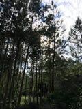 Träd som kysser himlar royaltyfria bilder