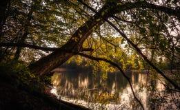 Träd som lutar över en sjö royaltyfri foto