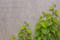 Träd som monteras på en betongvägg Royaltyfri Fotografi
