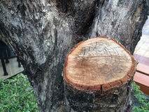 Träd som ner klipps Royaltyfria Bilder