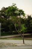 Träd som omges av gröna sidor, bakgrund med små träd med gröna sidor arkivfoto