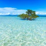Träd som omges av vatten på den tropiska ön Arkivbilder