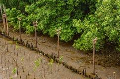 Träd som planteras i havet på smällPu i Samut Prakan fotografering för bildbyråer