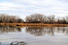 Träd som reflekterar arkivfoto