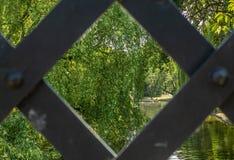 Träd som reflekterar i en parkera i London i sommar - 2 Arkivfoton