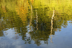 Träd som reflekterar i en sjö Arkivbild