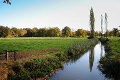 Träd som reflekterar i en ström Arkivfoto