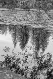 Träd som reflekterar på sjön i höst Arkivbild
