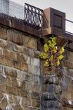 Träd som rotas på sida av viadukten royaltyfri bild
