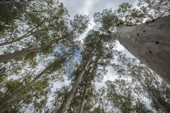 träd som siktar för himlen royaltyfria foton