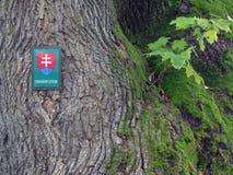 Träd som skyddas av tillståndet, i Slovakien arkivfoto