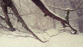Träd som smeker snön royaltyfri foto
