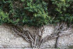 Träd som spiras till och med stenen Royaltyfri Fotografi