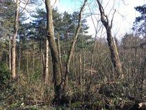 Träd som stiger upp i solen Arkivbilder