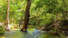 Träd som svänger i vinden och ett berg, strömmar stock video