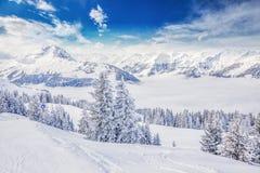 Träd som täckas av nya insnöade Tyrolian fjällängar från Kitzbuhel, skidar semesterorten, Österrike Royaltyfri Fotografi