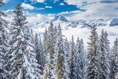 Träd som täckas av nya insnöade Tyrolian fjällängar från Kitzbuhel, skidar semesterorten, Österrike Arkivfoto