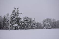 Träd som täckas av nya vita insnöade trädgårdar för pumprum, mitten Leamington Spa, UK - övervintra landskapet, december 2017 royaltyfri bild