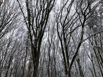 Träd som täckas i insnöad vinter Arkivfoton