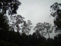 Träd som täckas i mistkontur Arkivfoto