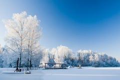 Träd som täckas i rimfrost Arkivfoto