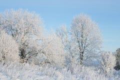 Träd som täckas i rimfrost på en kall vinterdag Fotografering för Bildbyråer