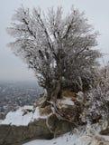 Träd som täckas med frost i berg Arkivfoton