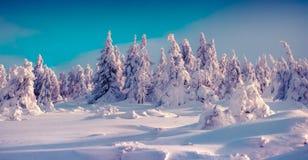 Träd som täckas med glödande ljus sunli för rimfrost och för ny snö Arkivfoton