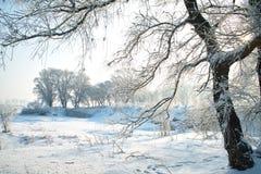 Träd som täckas med glasyr Arkivfoto