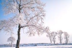 Träd som täckas med glasyr Royaltyfri Bild