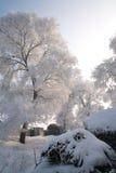 Träd som täckas med glasyr Royaltyfri Foto
