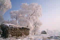 Träd som täckas med glasyr Arkivbild