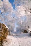 Träd som täckas med glasyr Royaltyfria Bilder