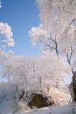 Träd som täckas med glasyr Royaltyfria Foton