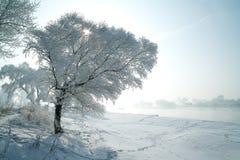 Träd som täckas med glasyr Fotografering för Bildbyråer