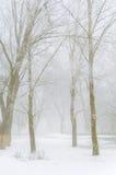 Träd som täckas med insnöat skogen i tjock dimma, övervintrar landsc Arkivbild