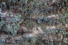 Träd som täckas med mossaabstrakt begreppbakgrund Arkivbild