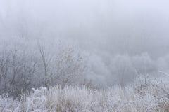 Träd som täckas med rimfrost i en dimma Arkivbild