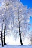 Träd som täckas med rimfrost i vinter. Arkivbilder