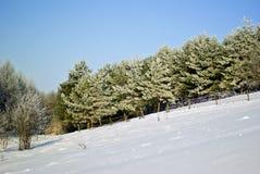 Träd som täckas med rimfrost i vinter. Royaltyfri Foto
