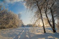 Träd som täckas med rimfrost mot himlen Arkivbild