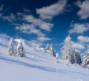 Träd som täckas med rimfrost och snö Royaltyfri Fotografi