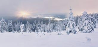 Träd som täckas med rimfrost och snö Royaltyfri Bild