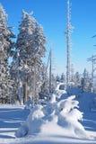 Träd som täckas med snö Arkivbild