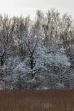 Träd som täckas med snö, på kanten av skogen Arkivbild