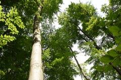 Träd som vänder upp arkivfoton
