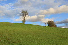 Träd som väntar på vintern Arkivbilder