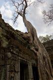 Träd som växer över ingången för Ta Prohm Arkivbild