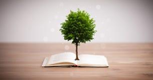 Träd som växer från en öppen bok fotografering för bildbyråer